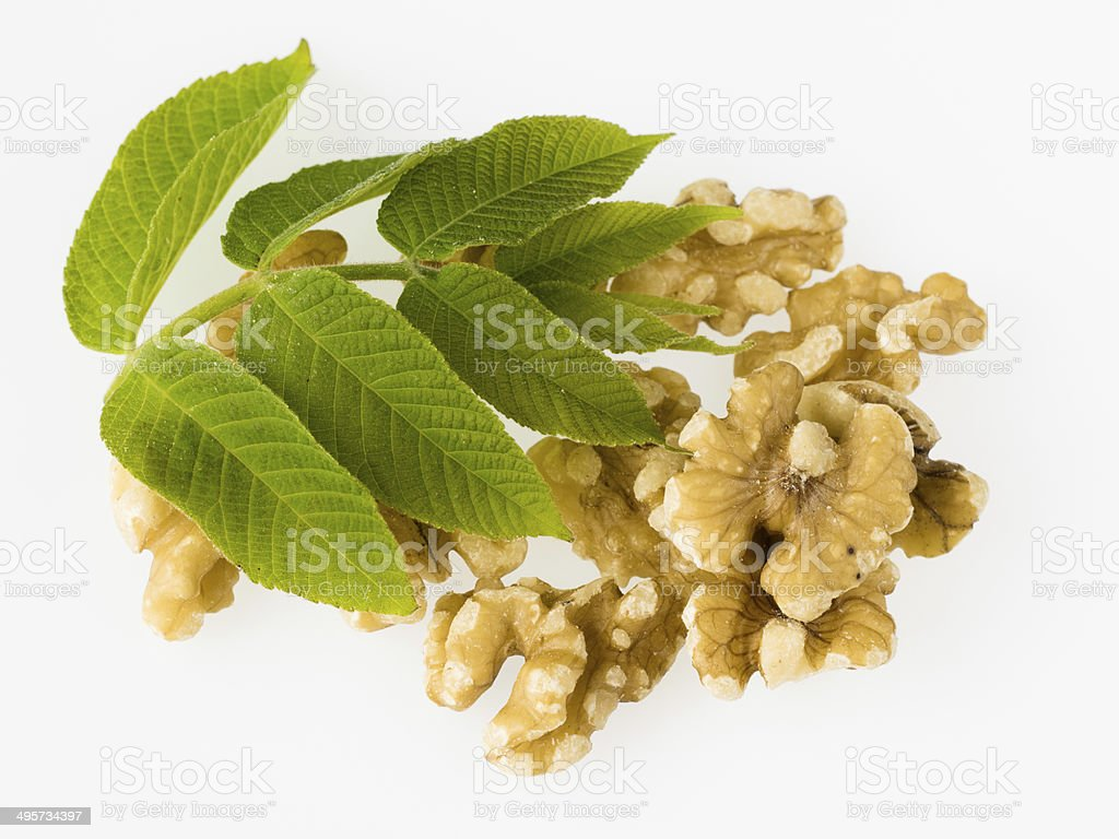 Leaf and nuts of the walnut stock photo