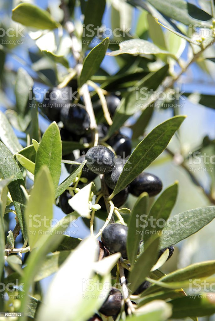 leaf and olive royalty-free stock photo