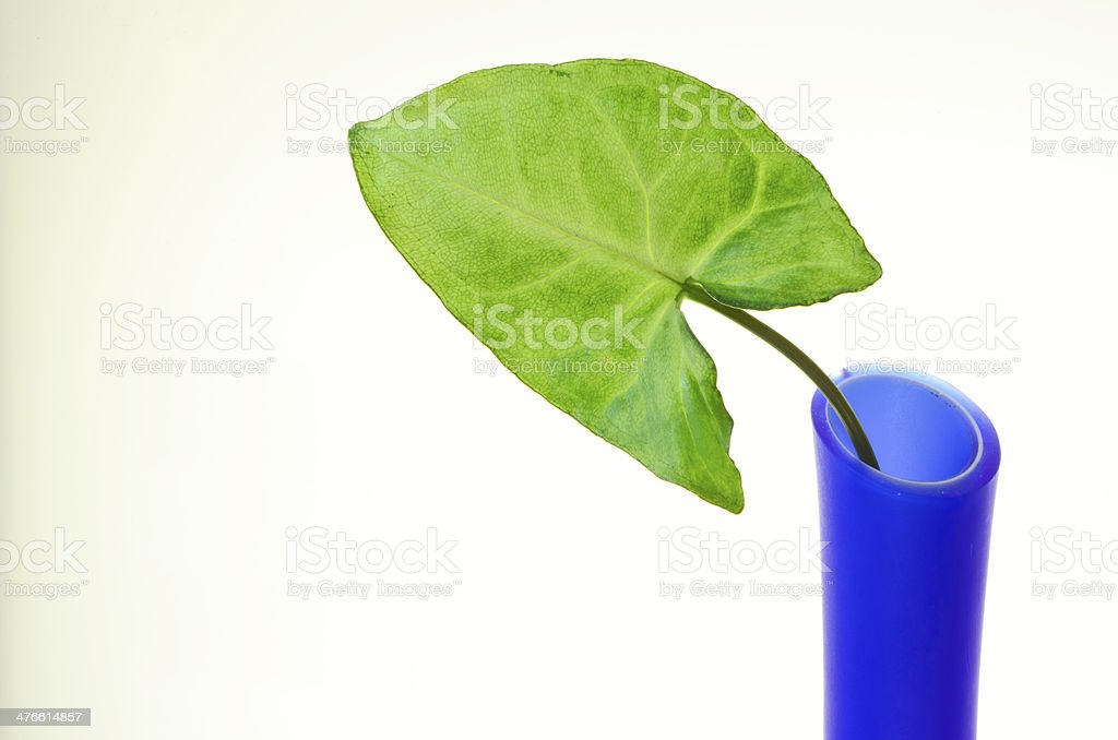 Leaf and Vase royalty-free stock photo