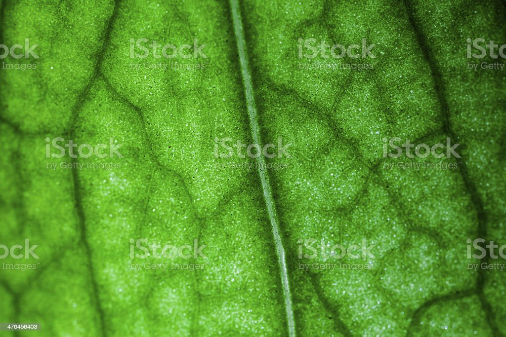 Leaf Backdrop royalty-free stock photo
