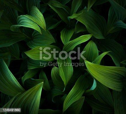 USA, Oregon, Leaf, Backgrounds, Tropical Climate