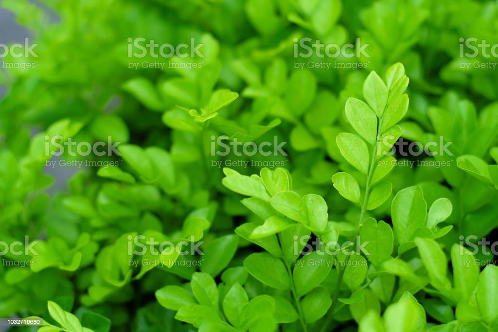 Leaf Background Material, Fresh Green Background. stock photo