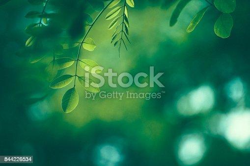 istock Leaf Background 844226534