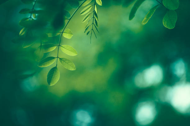 Leaf Background Leaf Background lush foliage stock pictures, royalty-free photos & images