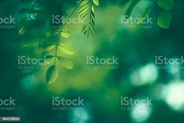 Photo of Leaf Background