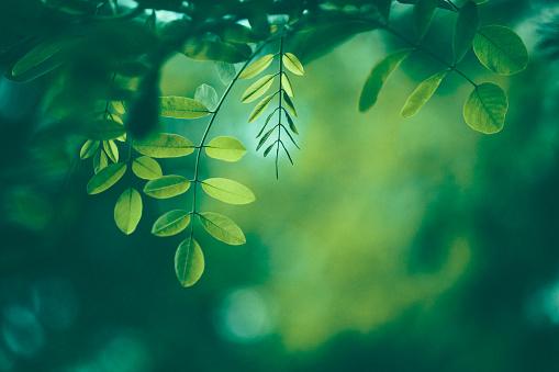잎 배경 0명에 대한 스톡 사진 및 기타 이미지