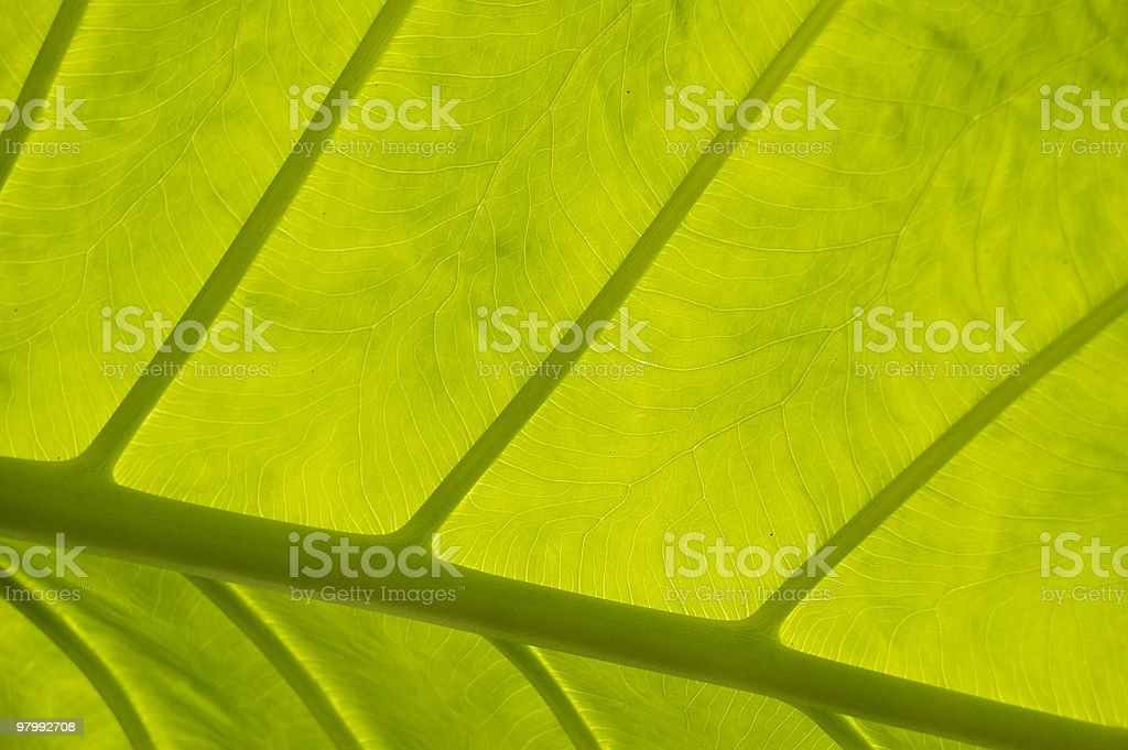 Leaf background royalty-free stock photo