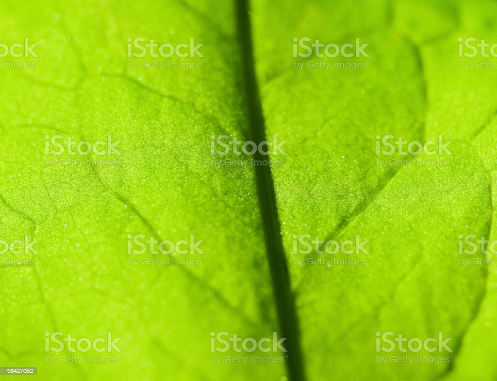 Leaf background royalty-free stock photo