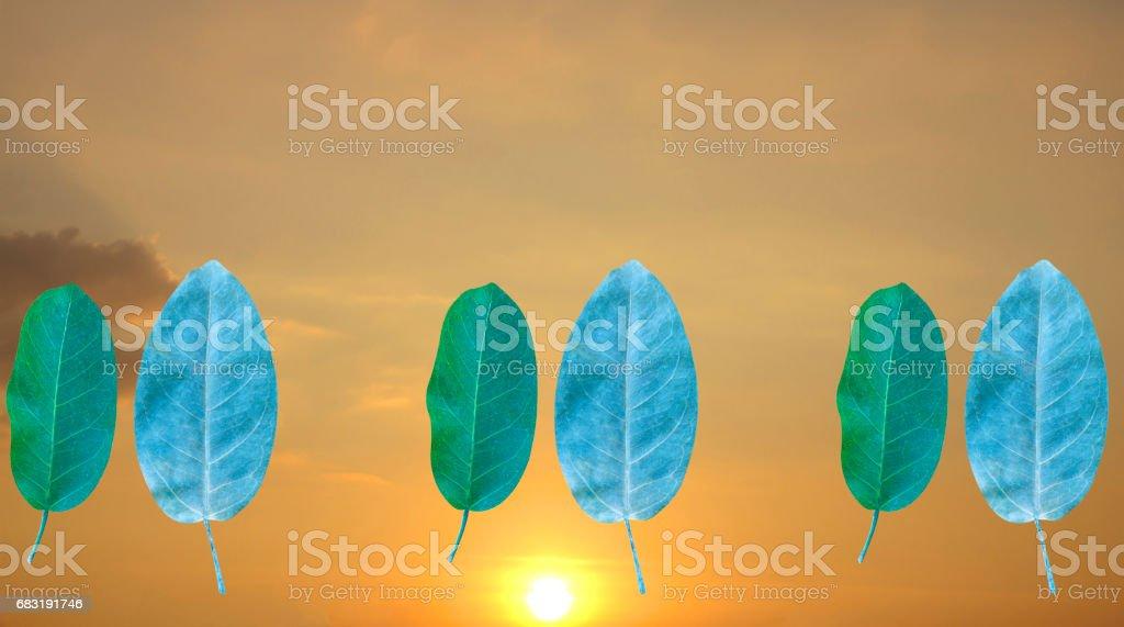 잎 배경기술 스카이 royalty-free 스톡 사진
