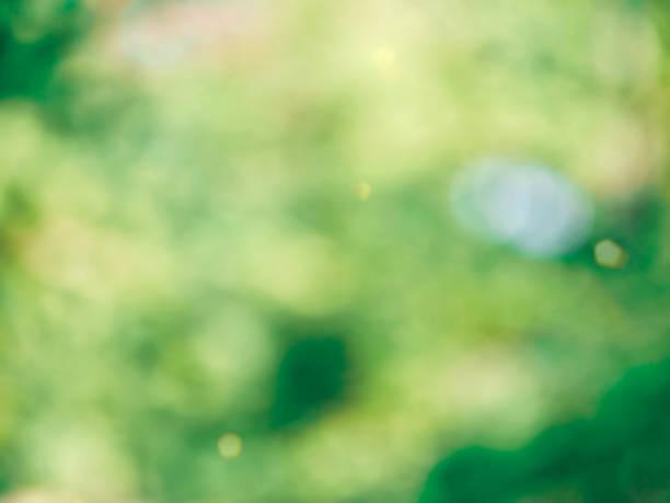 blad bokeh in het bos, gemiste focus - maart stockfoto's en -beelden