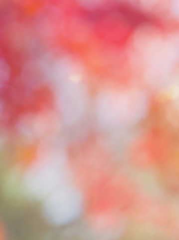 istock Leaf bokeh in the forest, missed focus 1127206147