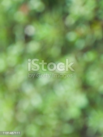 istock Leaf bokeh in the forest, missed focus 1131487111