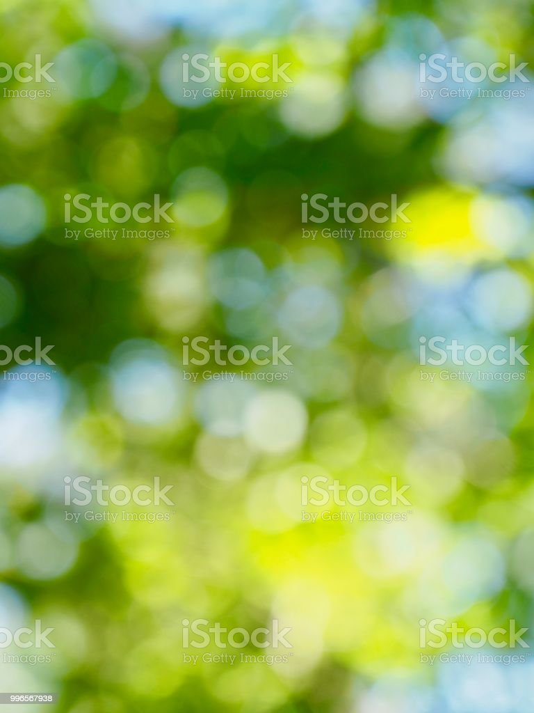 Leaf bokeh in the forest, missed focus stock photo