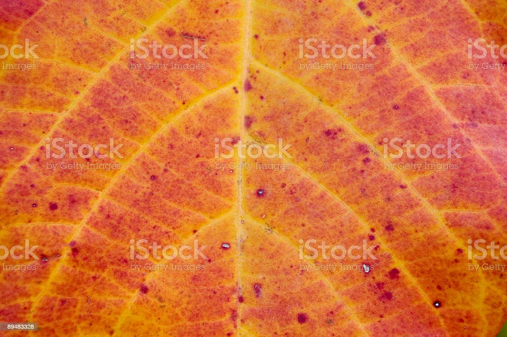 Leaf Close Up stock photo