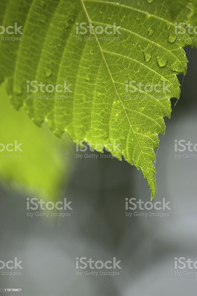 Leaf close-up detail stock photo