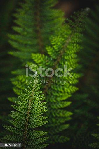 beautiful fern plant background
