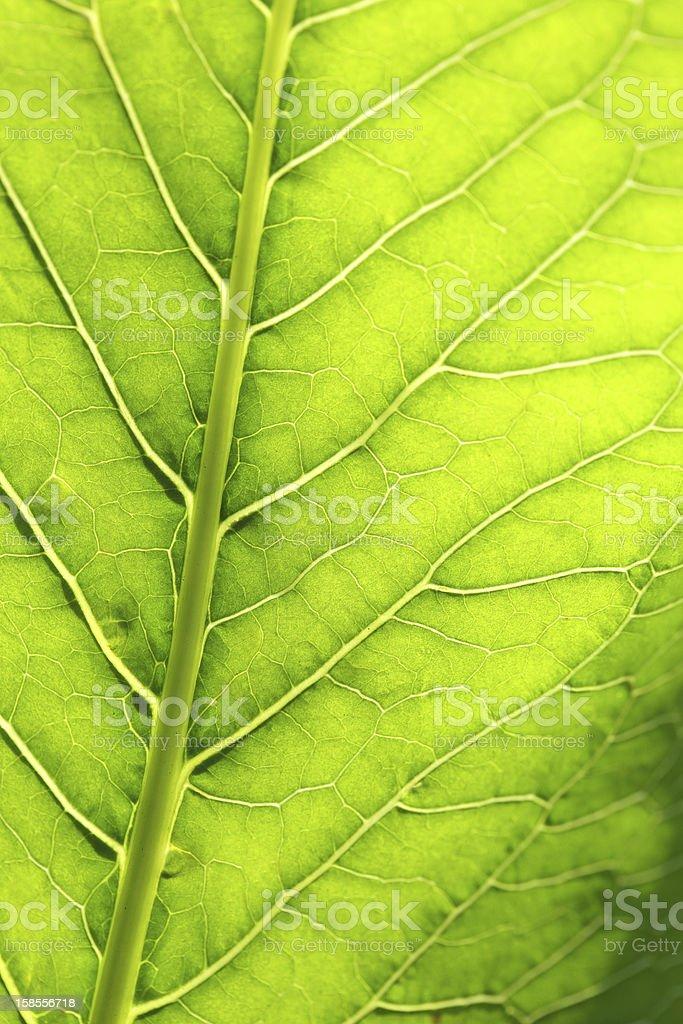 잎 클로즈업 royalty-free 스톡 사진