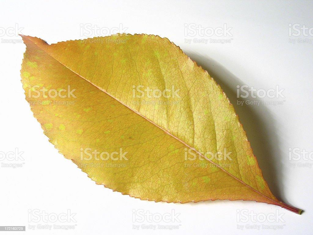Leaf closeup royalty-free stock photo