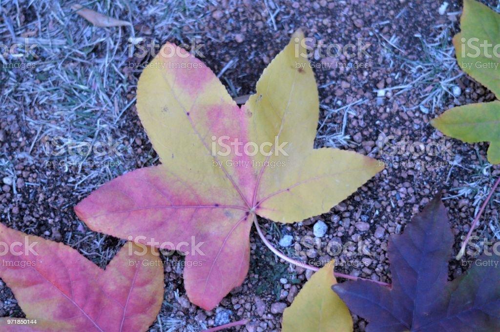 Leaf close-up stock photo