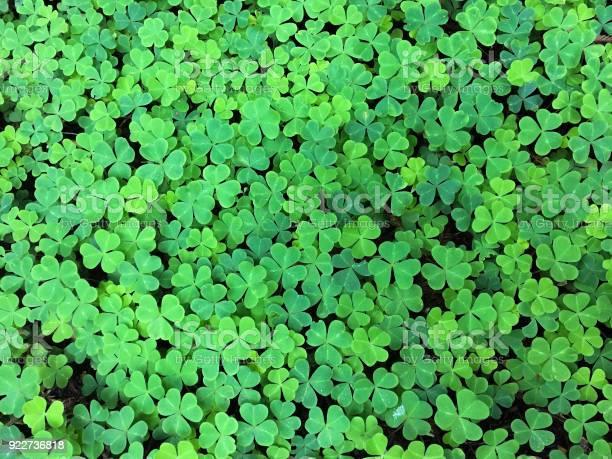Leaf clover background picture id922736818?b=1&k=6&m=922736818&s=612x612&h=xzqlo7zq6l5txpvnhdq aqpepagjwh6ga84esgyg9qk=