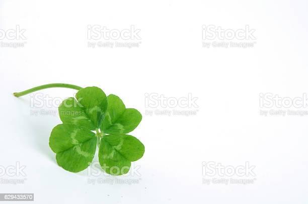 Leaf clover picture id629433570?b=1&k=6&m=629433570&s=612x612&h=mtc smi4ccfn4qcc8ycujw6vikxyitv8ocxyz1i9qqg=