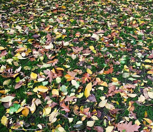 Leaf covered lawn stok fotoğrafı