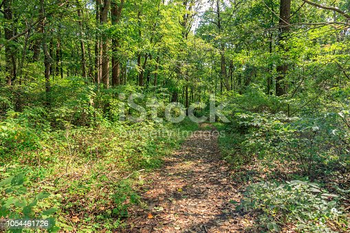 Walking along a leaf covered Path through a Forest within the Hibernia Park in Chester County -  a public park in eastern Pennsylvania