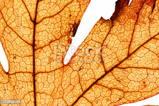 Abstract details of an old dried up leaf.You can more images like this in my