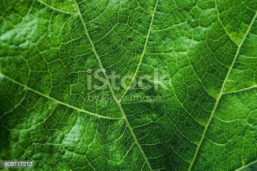 638812700istockphoto Leaf Detail 503777212