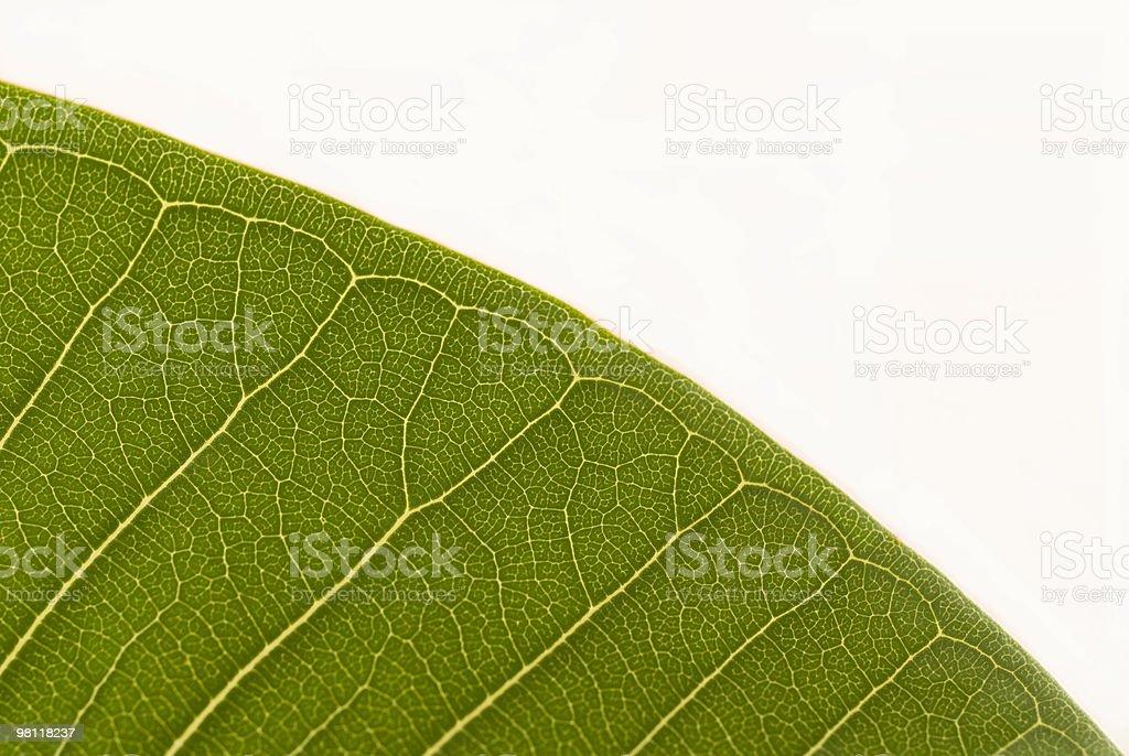 Leaf Detail stock photo