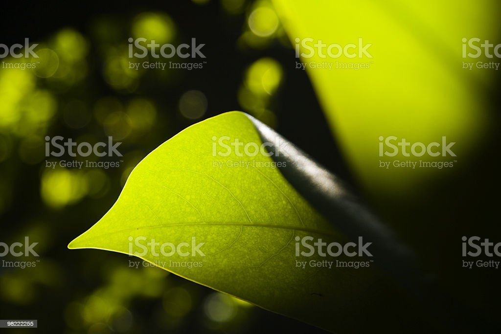 Leaf Detail royalty-free stock photo