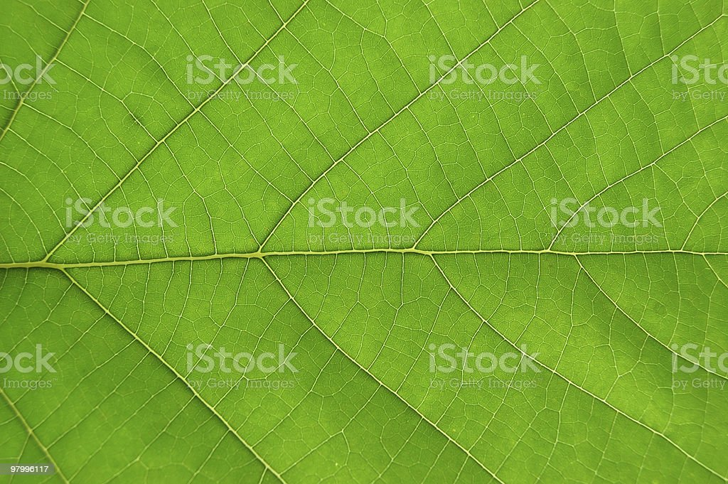 Leaf Details royalty-free stock photo