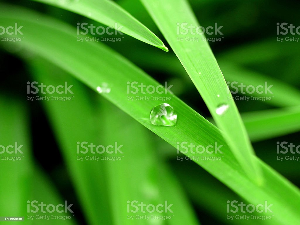 Leaf Drop Macro 2 royalty-free stock photo