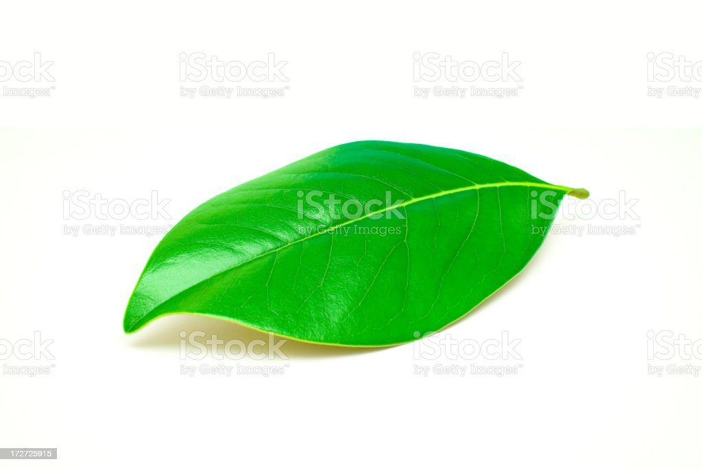 leaf due royalty-free stock photo
