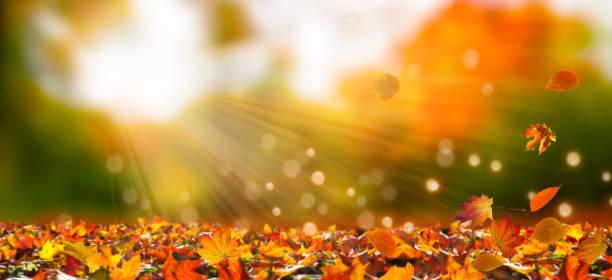 chute des feuilles dans le paysage idyllique - Photo