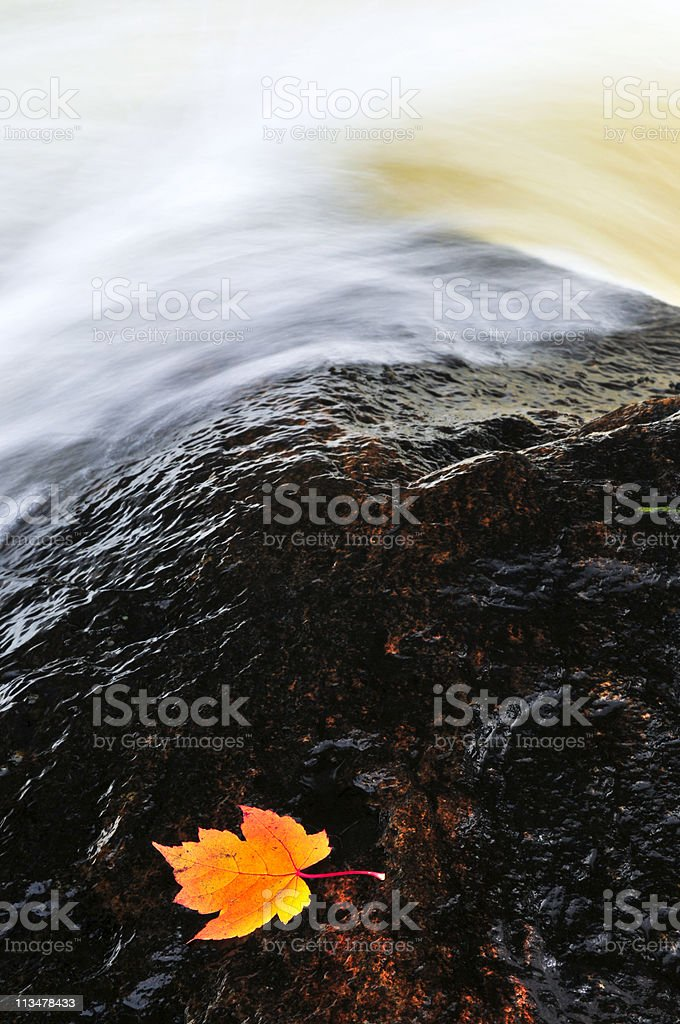 Leaf floating in river royalty-free stock photo
