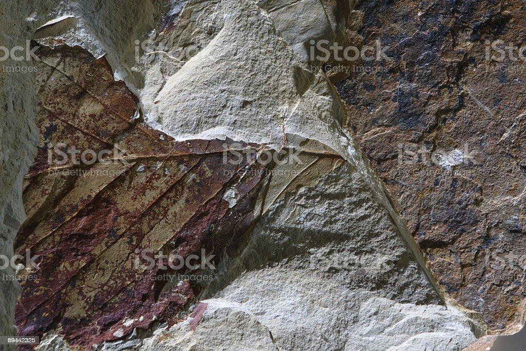 Leaf fossil. royalty-free stock photo