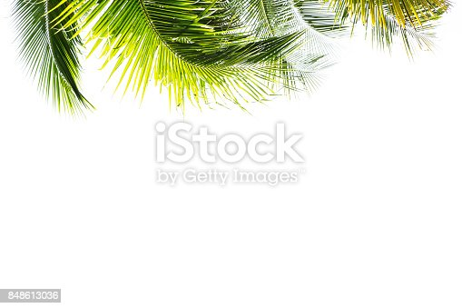 leaf frame isolated