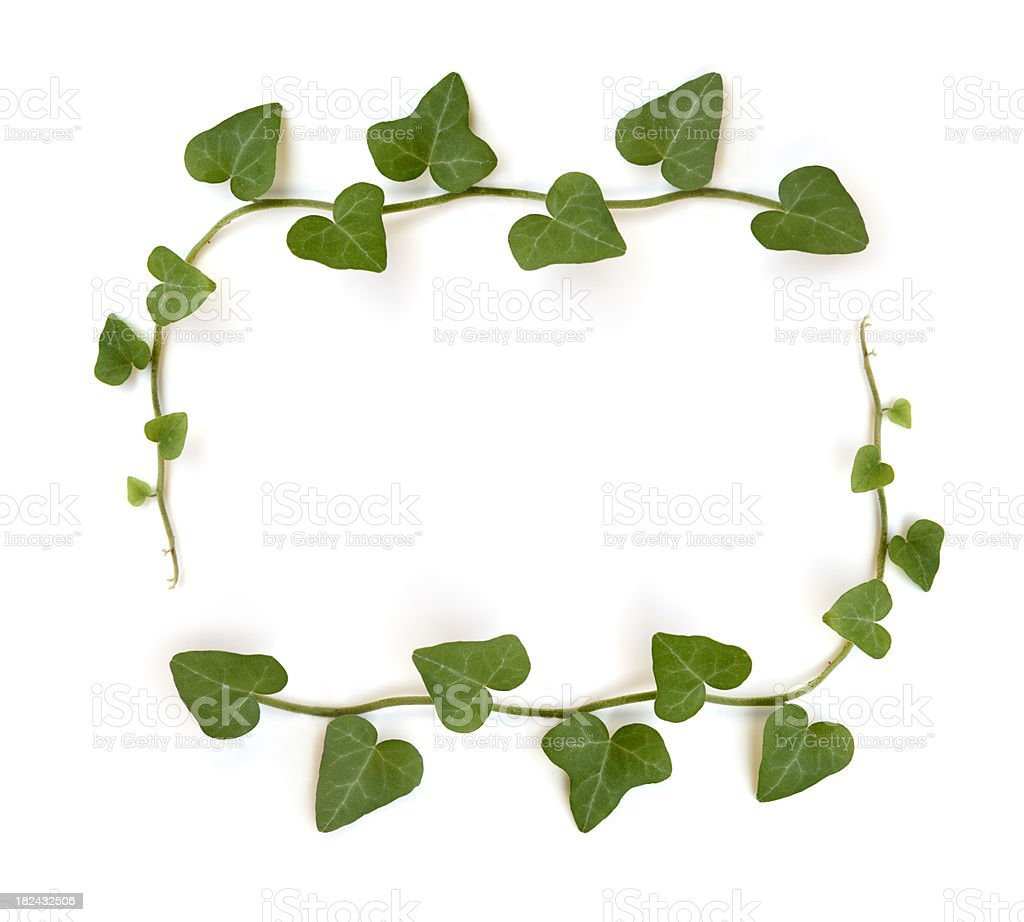 Leaf Frame royalty-free stock photo