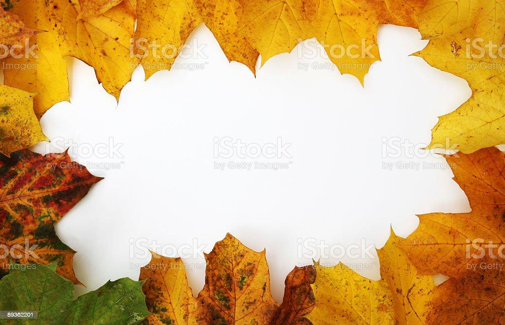 Leaf Frame royalty-free stock photo
