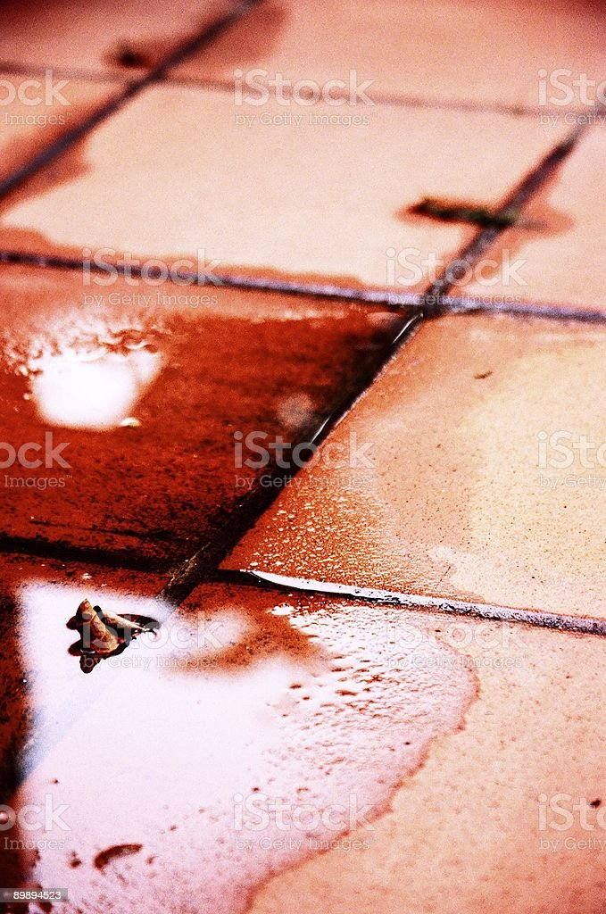 Leaf in a Puddle royalty-free stock photo