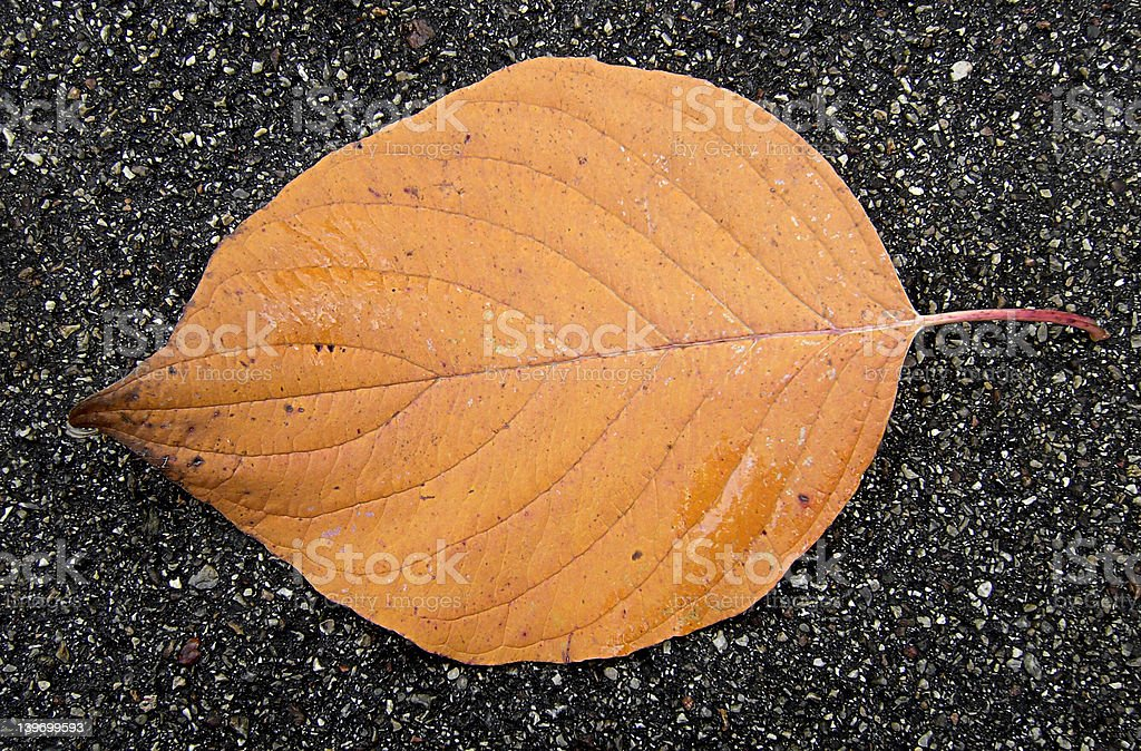 Leaf in Autumn royalty-free stock photo