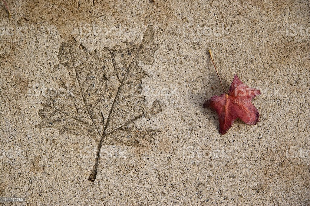 Leaf in concrete stock photo