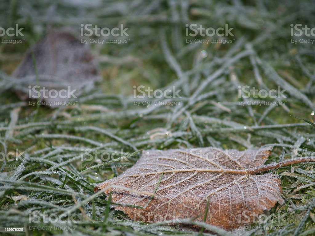 Leaf in grass royalty-free stock photo