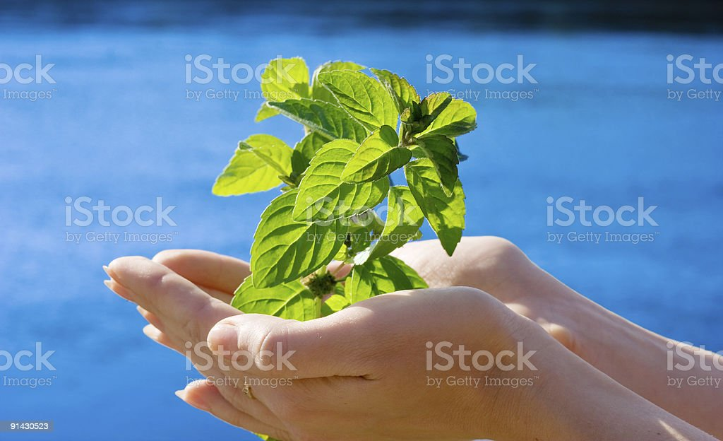 leaf in hands royalty-free stock photo