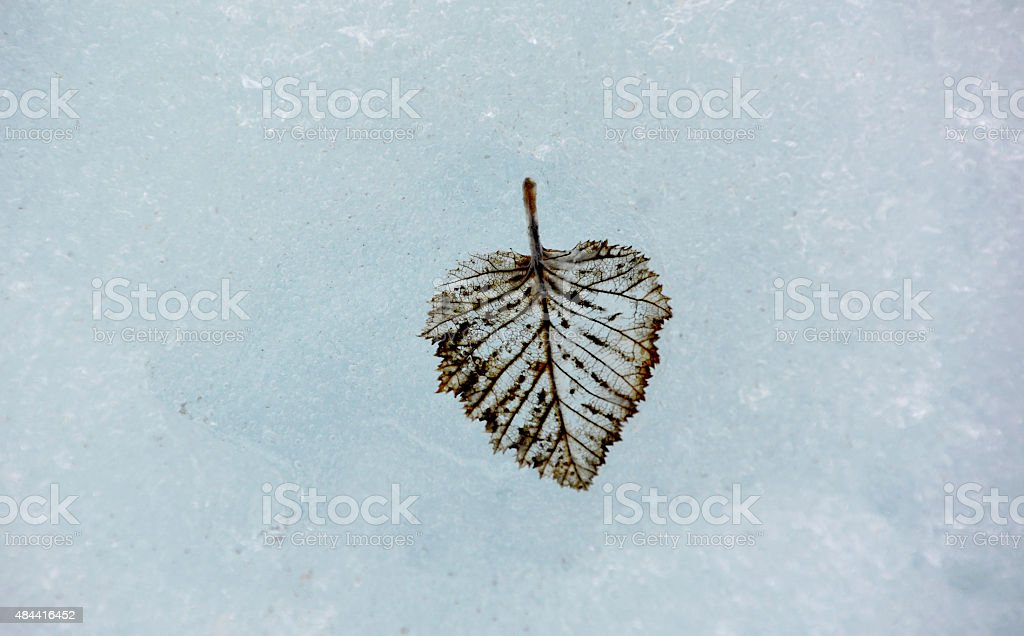 Leaf in Ice stock photo