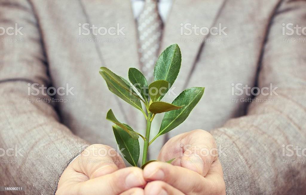Leaf in palm of hand royalty-free stock photo