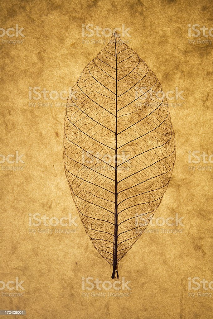 Leaf in parchment stock photo