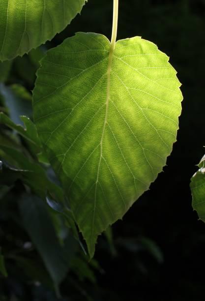 Blättern Sie im Schatten – Foto