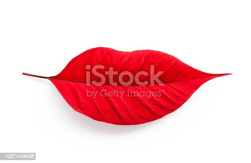 Leaf in shape of woman's lips. Poinsettia leaf.